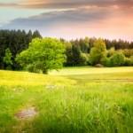 Miljø og rengøring - Allergene, hormonforstyrrende, miljøfarlige, skadelige eller giftige stoffer